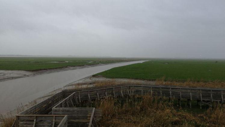 Vue de l'île de Pierre Rouge depuis l'observatoire, avec au fond la Loire et le village de Paimboeuf.
